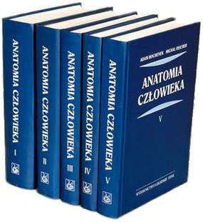 Na co zwrócić uwagę wybierając książki do nauki anatomii człowieka?